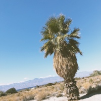 Lady-Goodman-Coachella-imperial-valley-roadtrip-travel-2